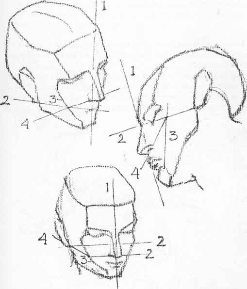 Construction Of The Head - Anatomical Drawings - Joshua Nava Arts