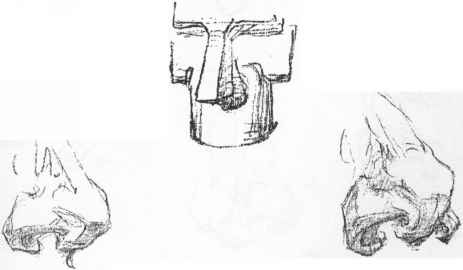 The Nose Anatomical Drawings Joshua Nava Arts