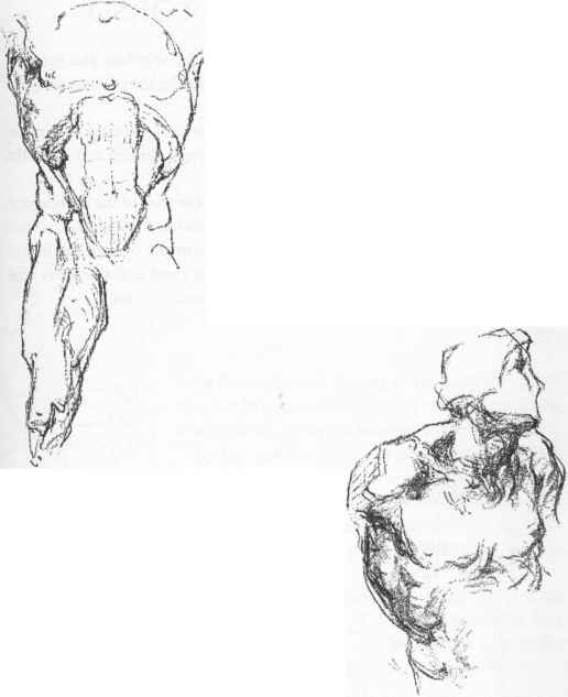 Draw A Breast Bone - Anatomical Drawings - Joshua Nava Arts