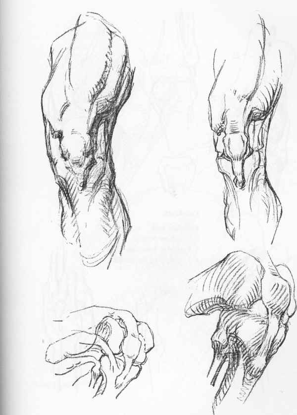 the knee anatomical drawings joshua nava arts
