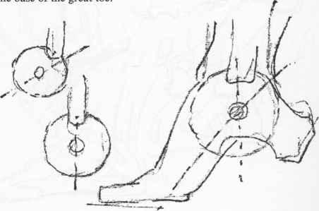 Abduction And Adduction - Anatomical Drawings - Joshua Nava Arts