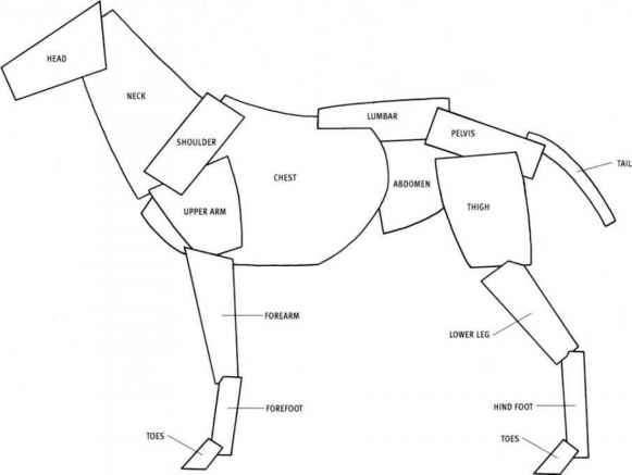 Manus Anatomy