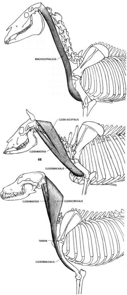 Horse Anatomy Drawing Images - human body anatomy