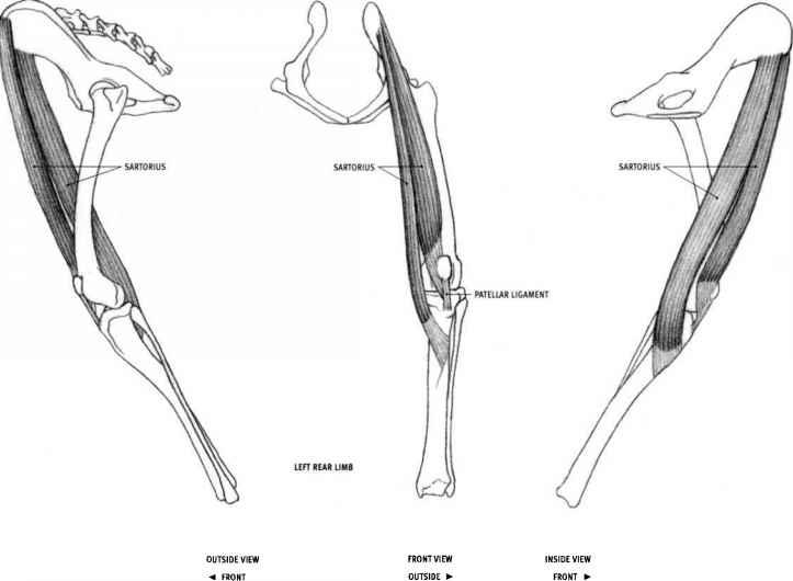 dog and feline animal anatomy joshua nava arts