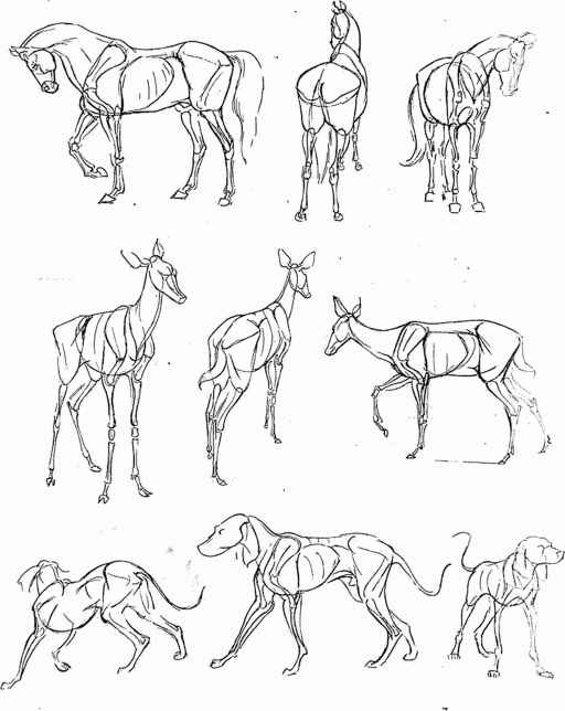 Animal forms drawings tips drawing animals