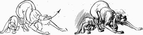 Horse Flarred Nostrils Drawings