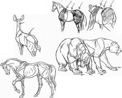 Animal bones draw
