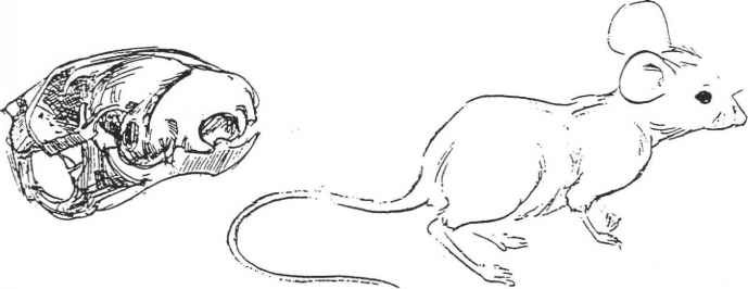 Vilppu Sketching On Location Manual Pdf Download