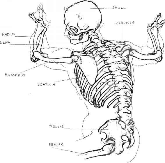 An Approach To The Study Of Anatomy Art Study Joshua Nava Arts