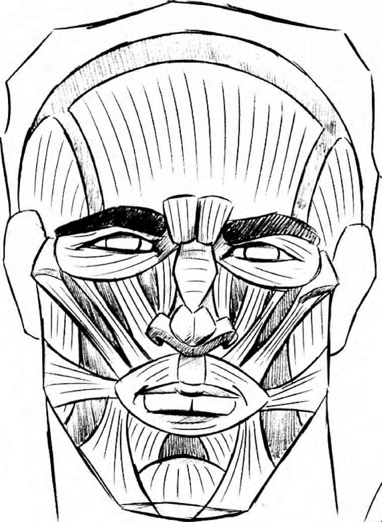 Contour Line Drawing Eye : Drawing muscles comics joshua nava arts