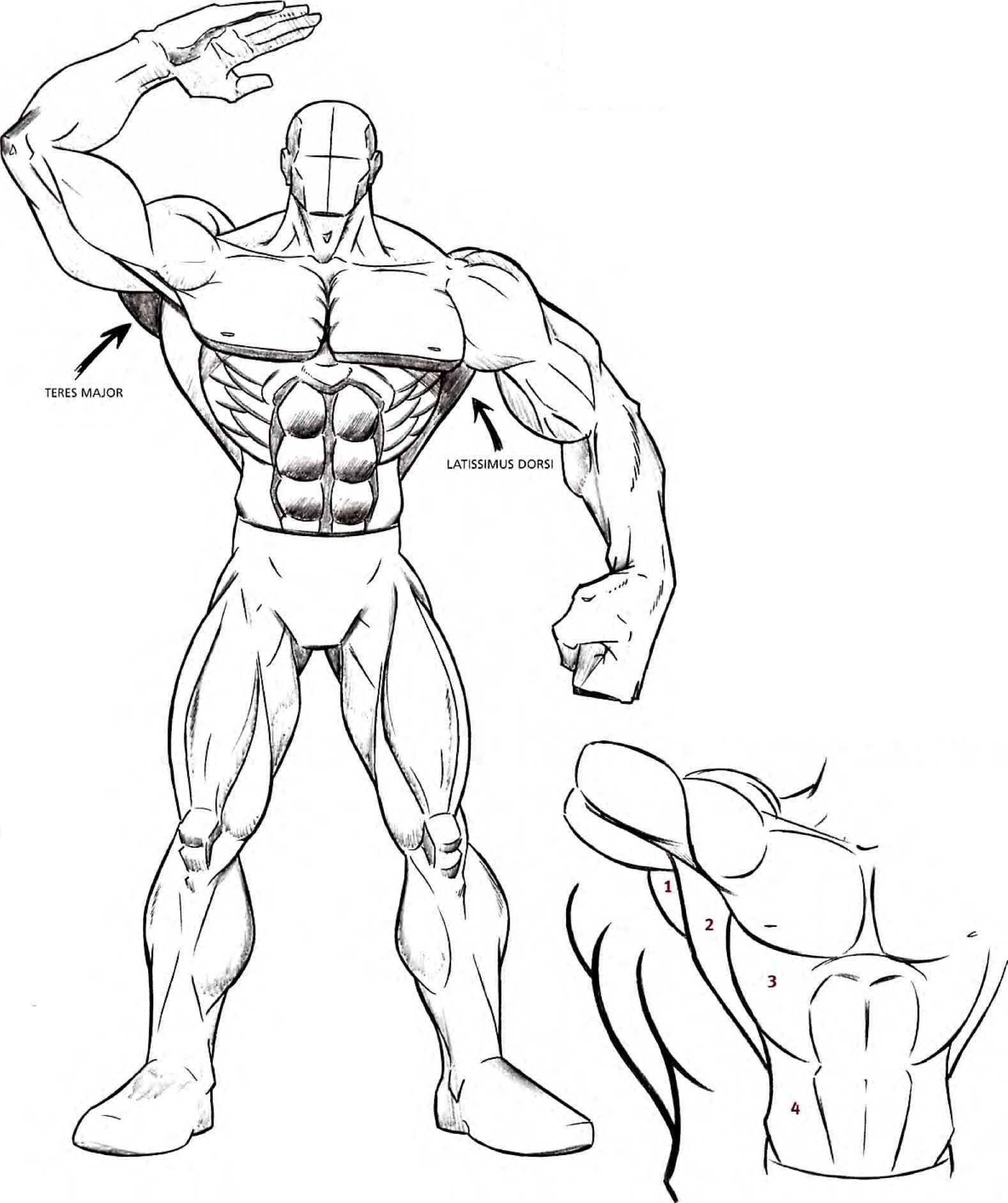 Drawing Muscles Drawing Comics Joshua Nava Arts
