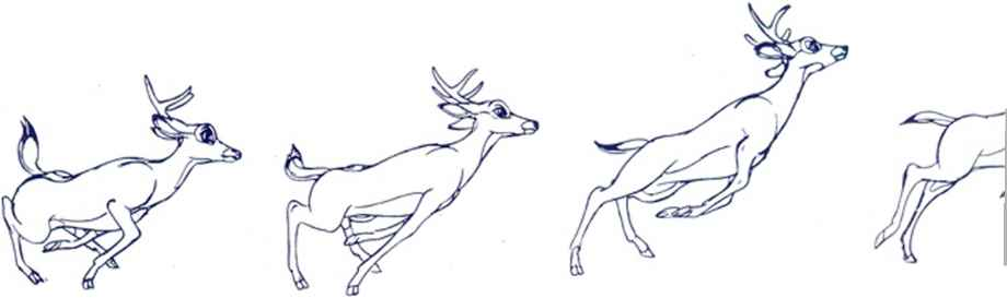 Animal Sketches Animation Disney