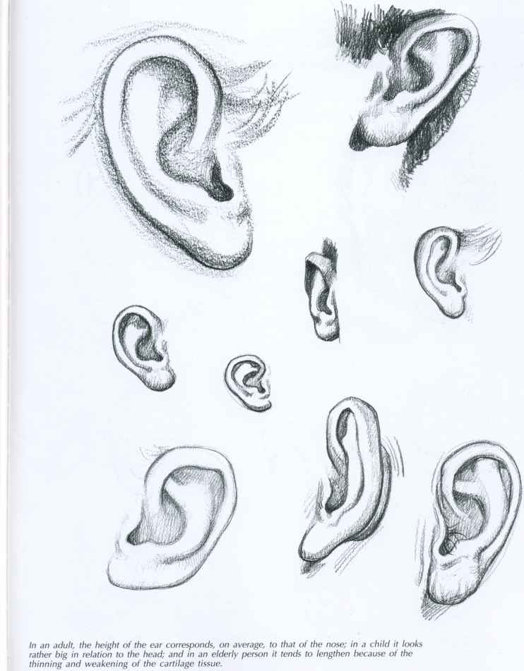 Sketching Faces - Drawing Faces and Figures - Joshua Nava Arts Ear Sketches