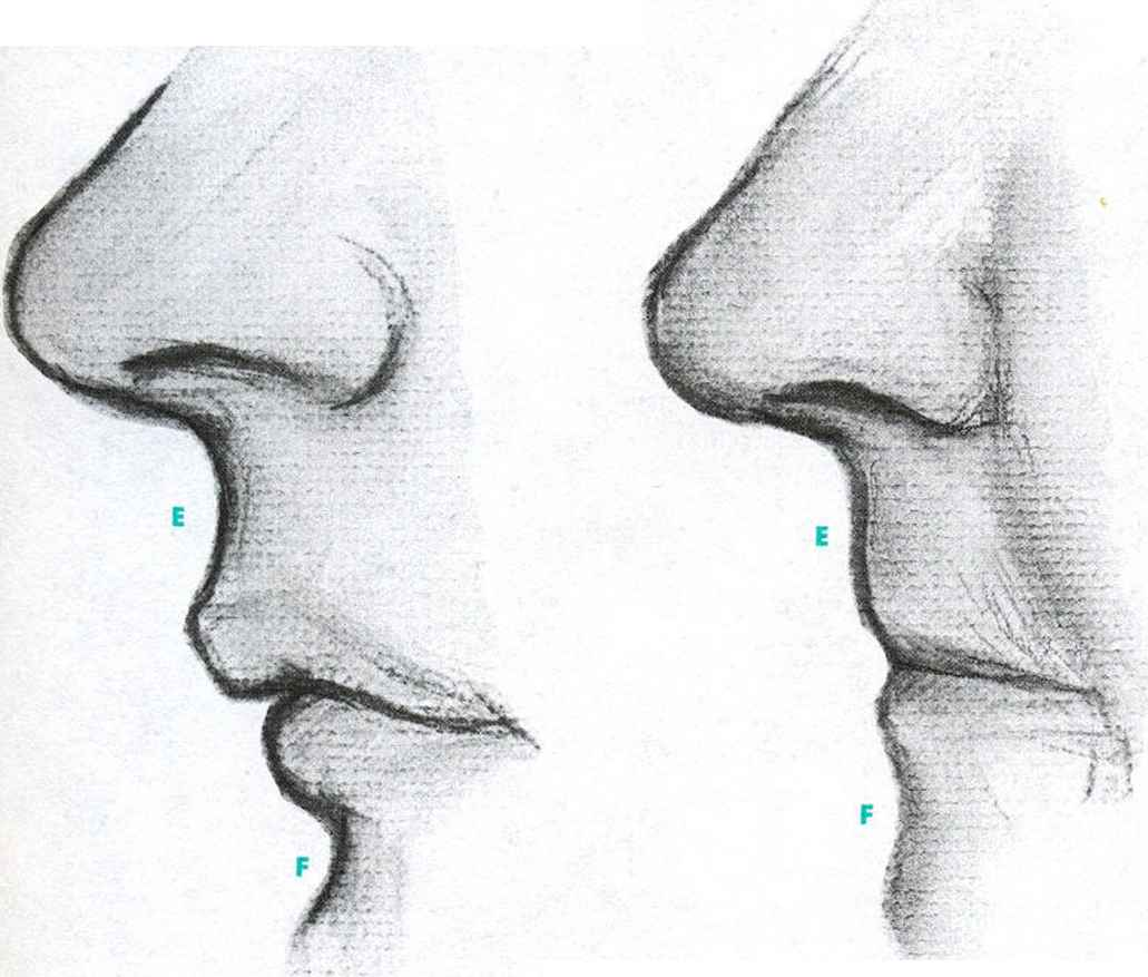 The Folds Above The Mouth - Facial Expressions - Joshua Nava Arts