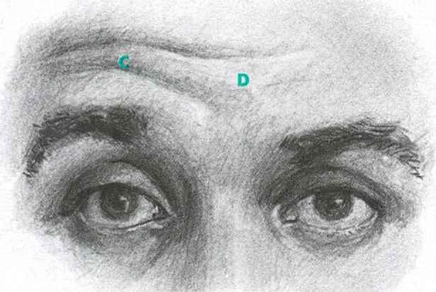 Frontalis The Eyebrow Lifter - Facial Expressions - Joshua Nava Arts