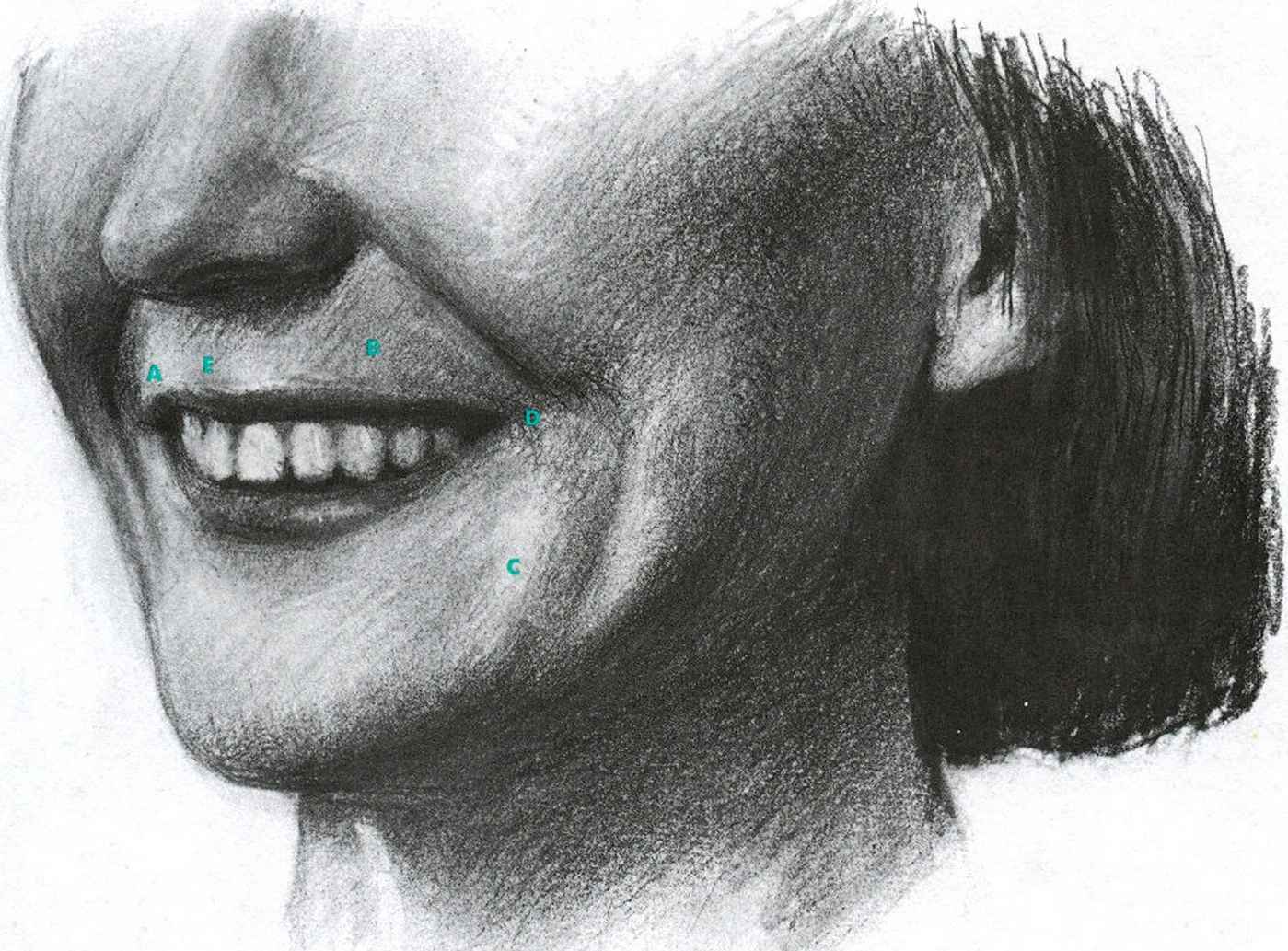 Zygomatic Major The Openmouthed Smile Facial Expressions