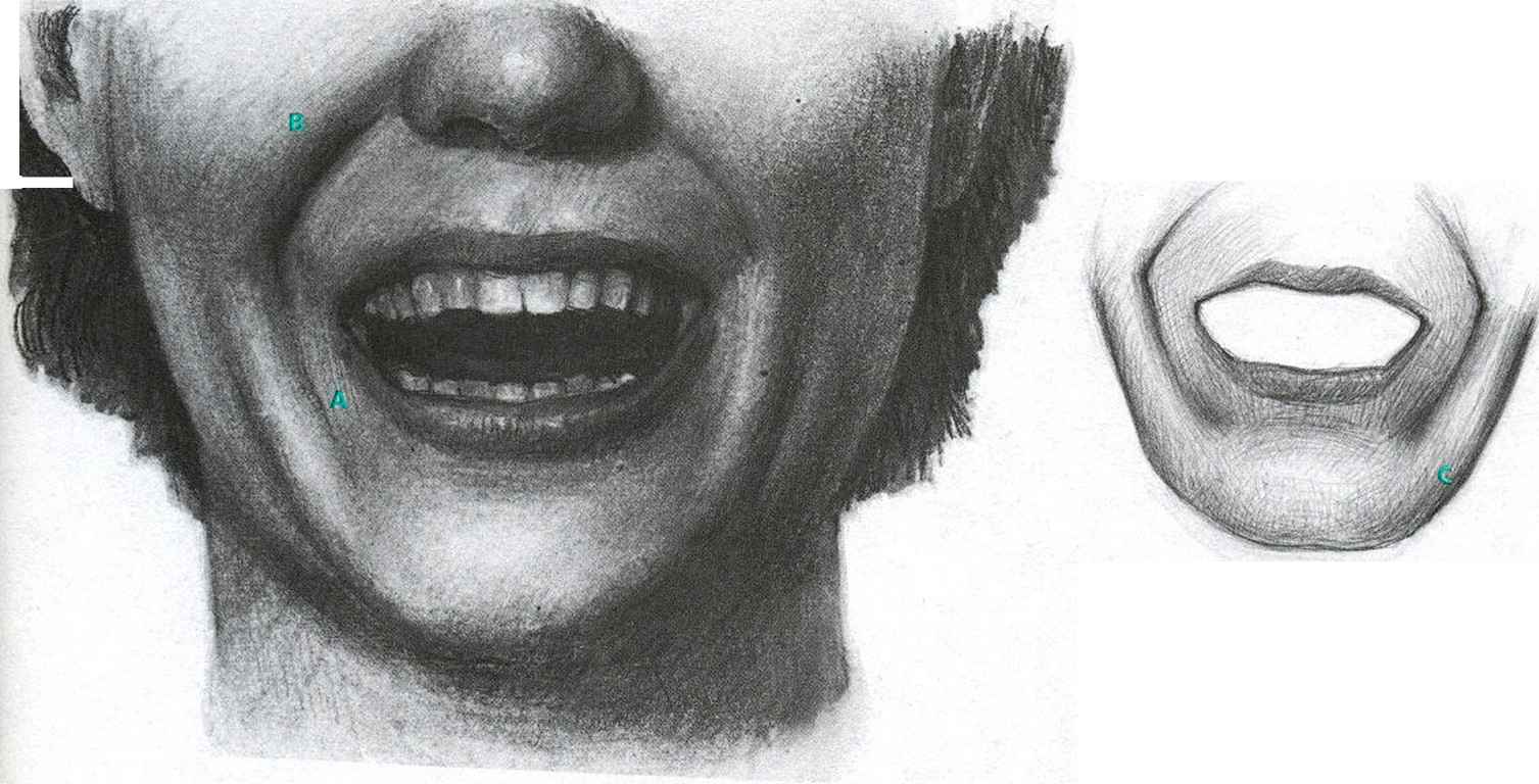 Zygomatic Major The Openmouth Smile Facial Expressions