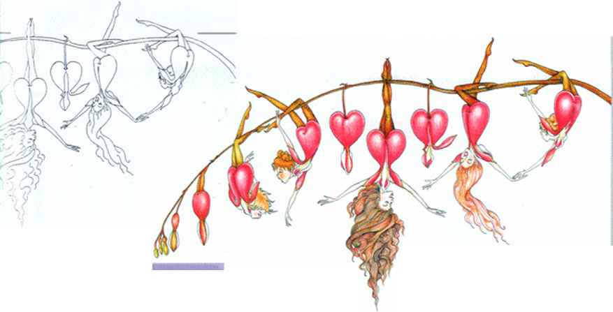 Bleeding Hearts Drawings Growing Stages
