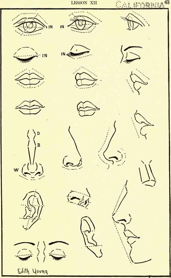 Face Profile Drawing Nose Types