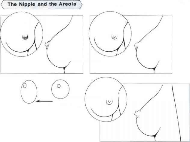 Female Breast Artist Drawing
