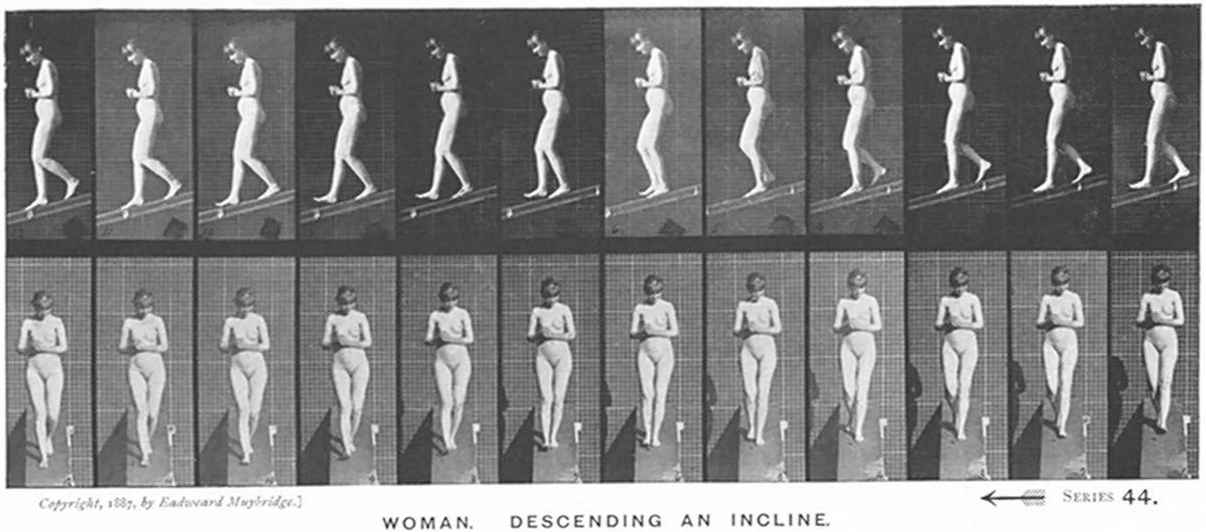 The Figure Motion