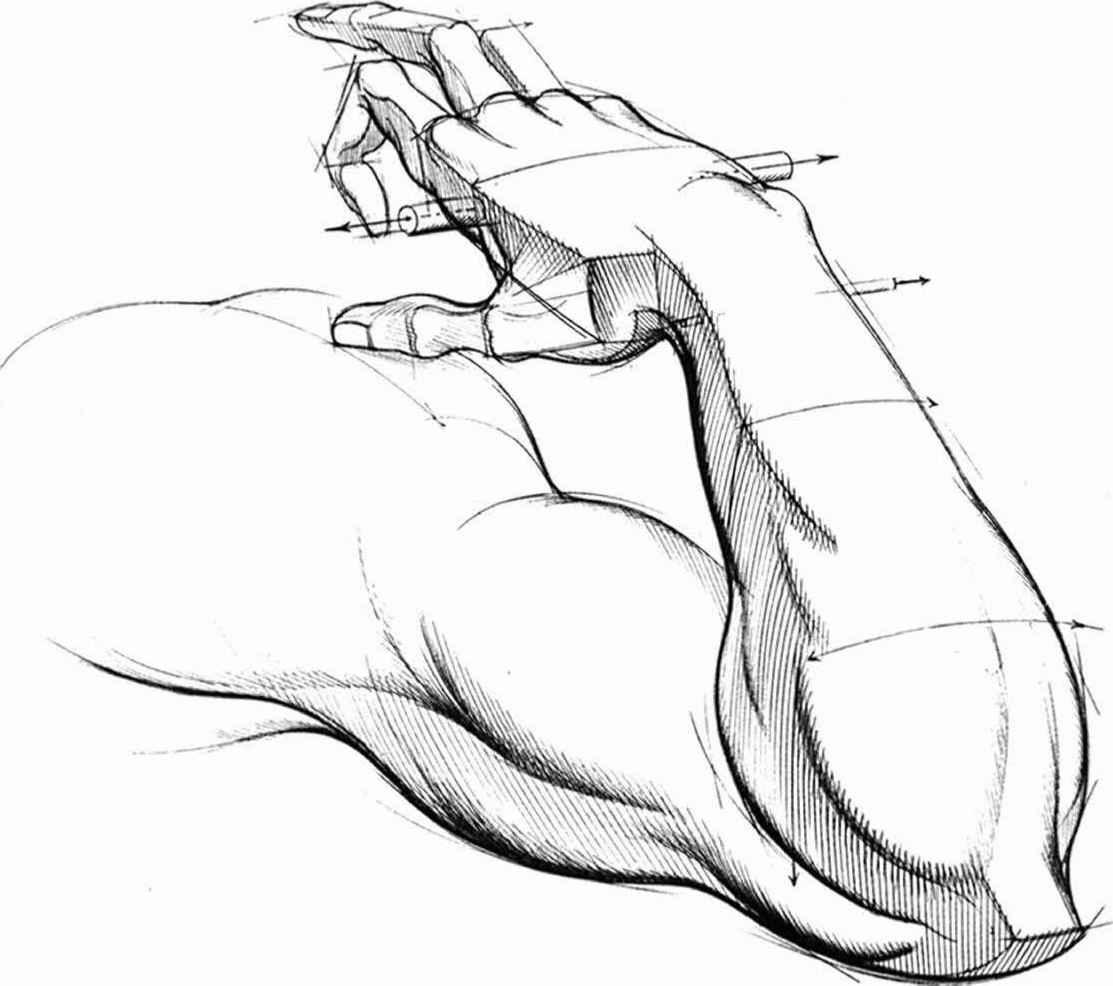 Cartoon arm drawing hypothenar eminence hand