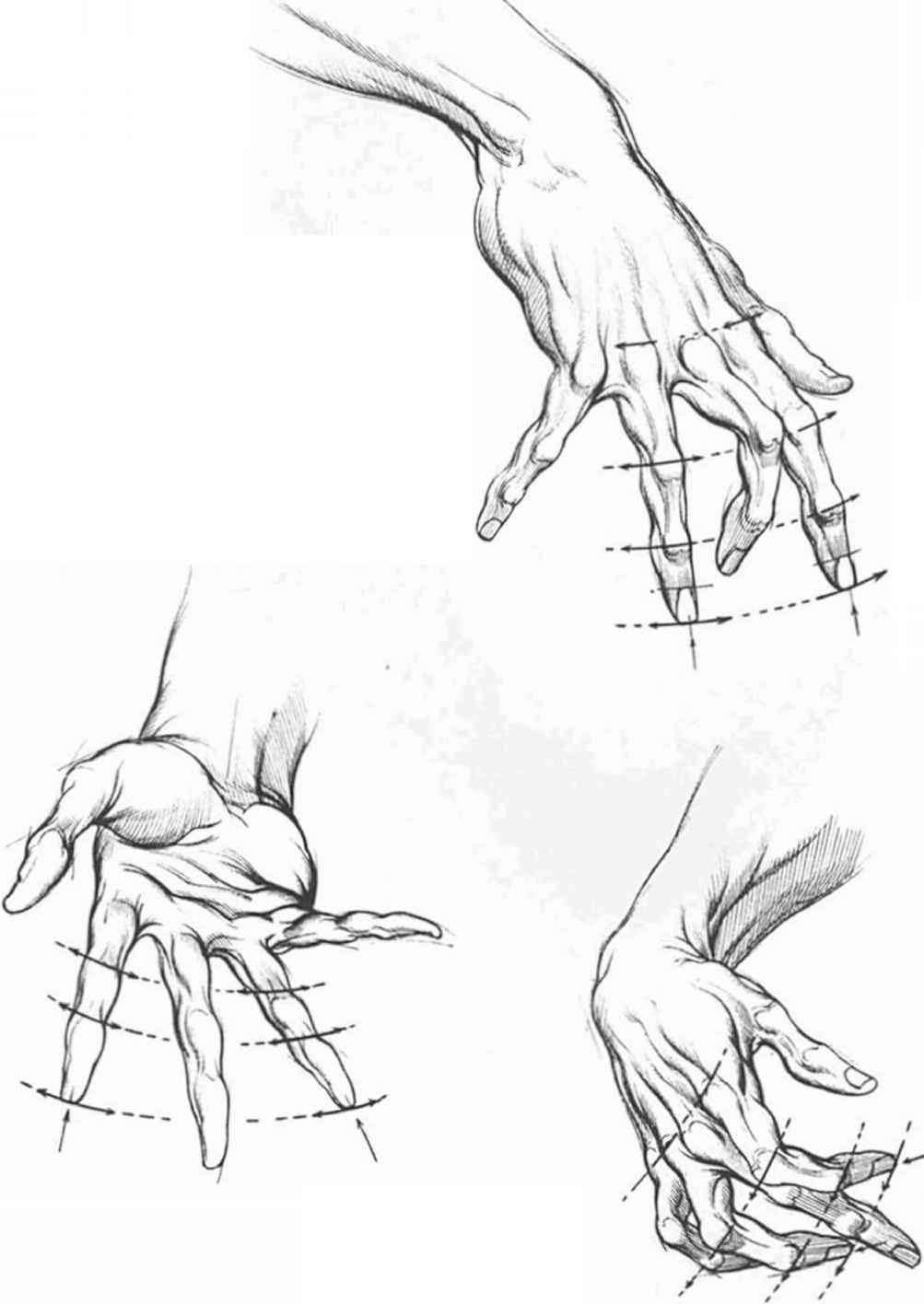 Proportions And Measurements - Drawing Hands - Joshua Nava Arts