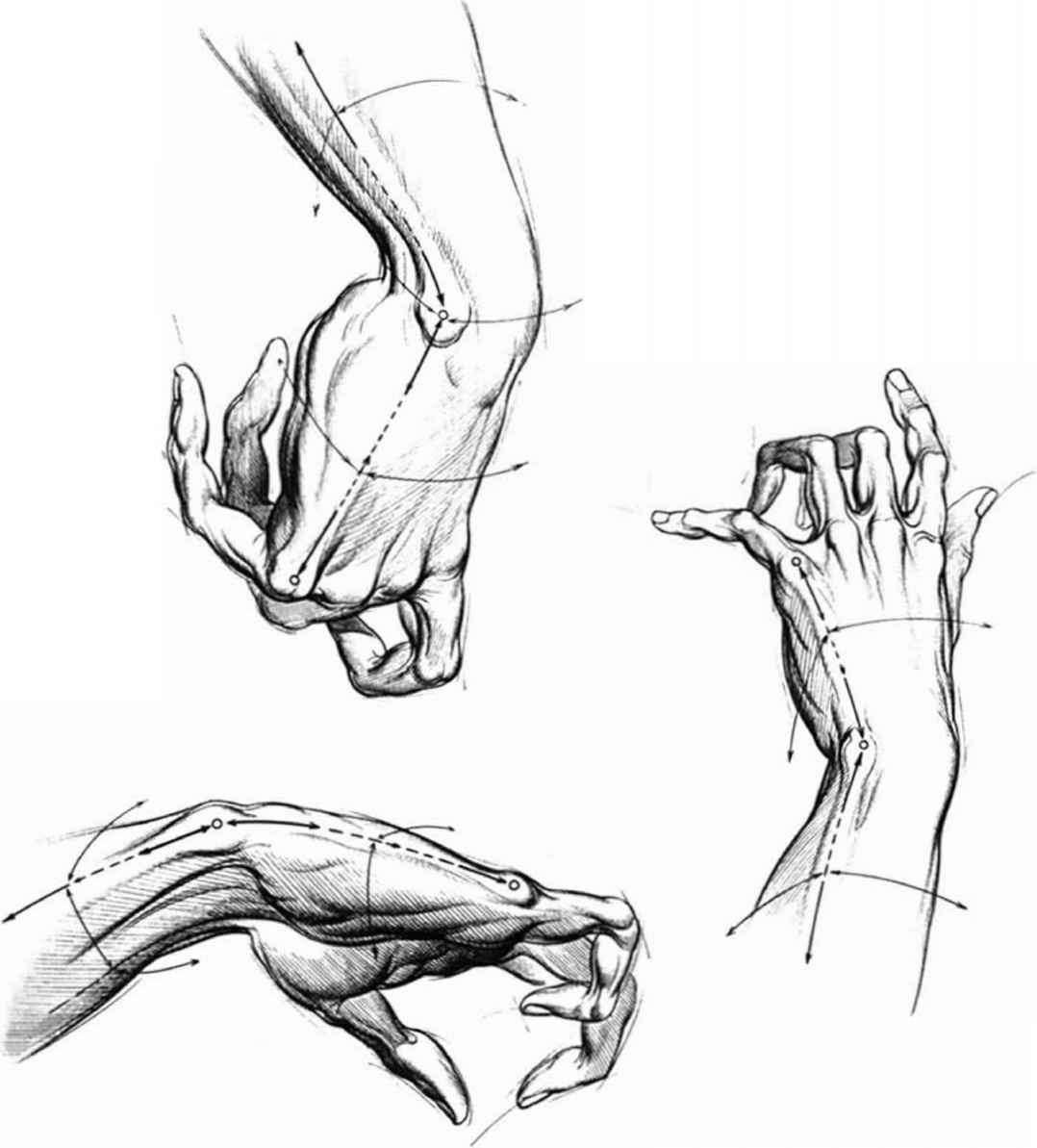 Proportions And Measurements Drawing Hands Joshua Nava Arts