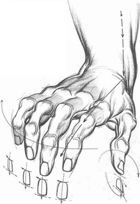 proportions and measurements drawing hands joshua nava arts rh joshuanava biz