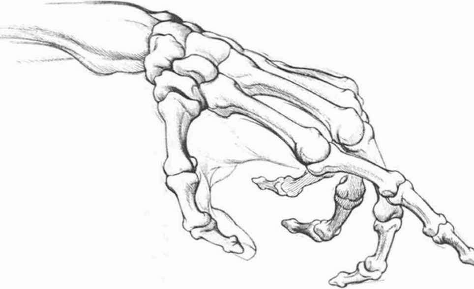Anatomyand Structure - Drawing Hands - Joshua Nava Arts