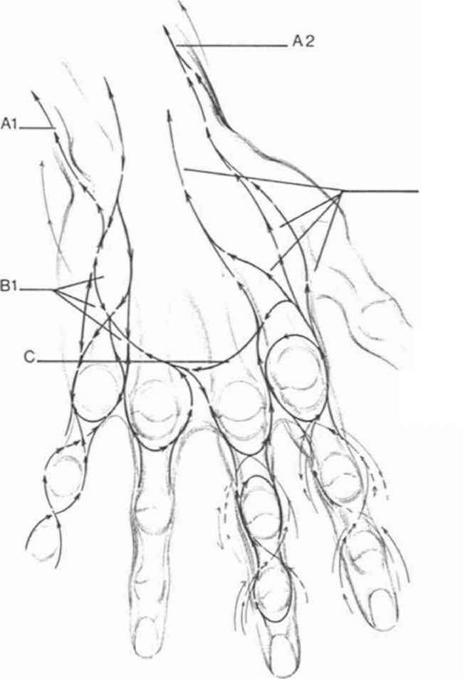 Diagram Of Palm Muscles
