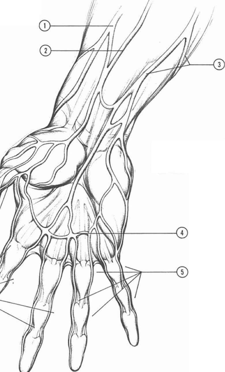 Anatomyand Structure - Drawing Hands - Joshua Nava Arts