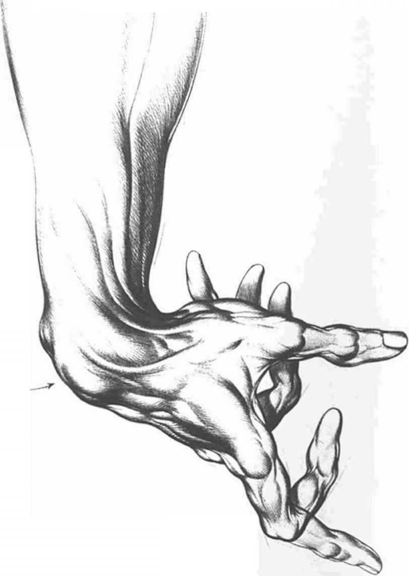 Anatomical Landmarks And Surface Stress - Drawing Hands