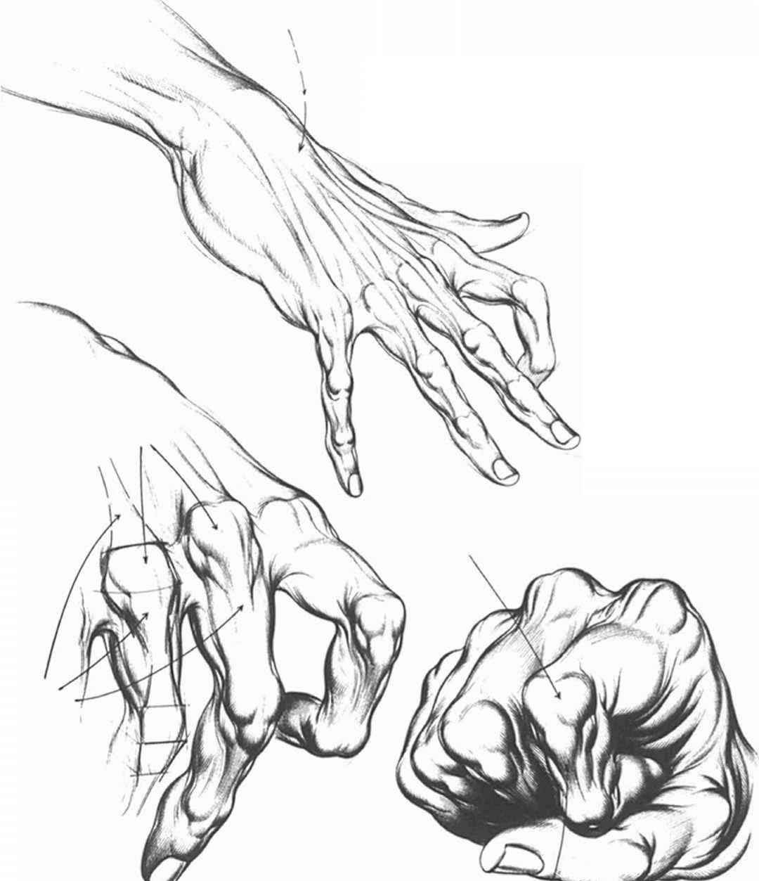 Anatomical Landmarks And Surface Stress Drawing Hands