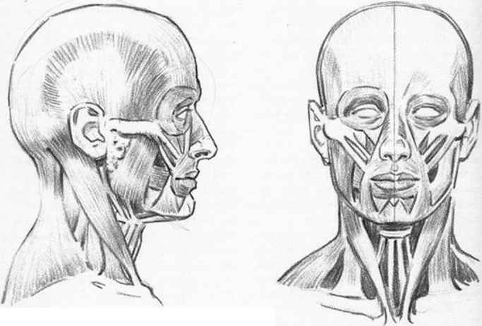 Expressions Facial Muscles