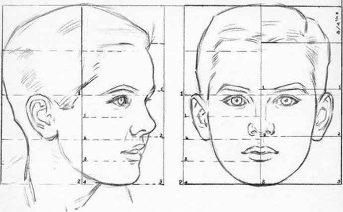 Proportions Heads And Faces