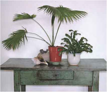 Seashell Arrangements