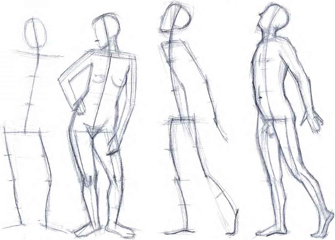 Drawing Constructing The Body Drawing The Human Body