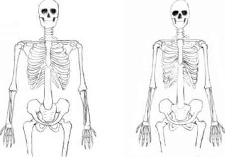male and female bodies - drawing human figure - joshua nava arts, Skeleton