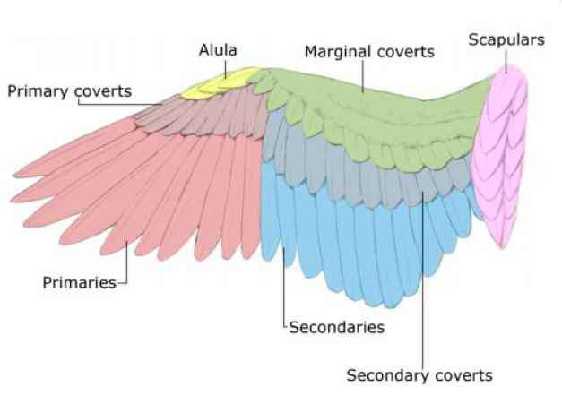 Compare Human And Birds Wings