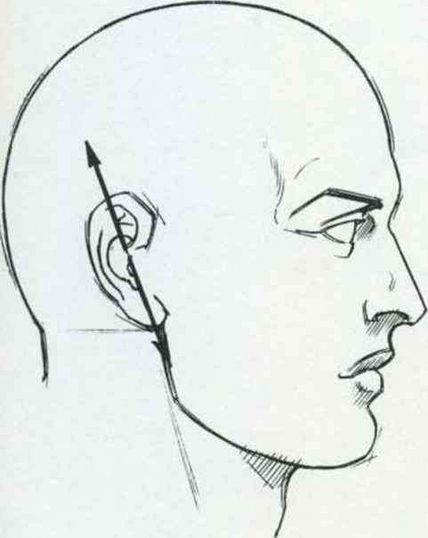 Human Head Illustration