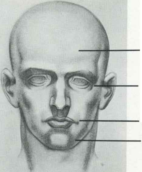 Eyes Anatomy Drawing Anatomy Drawing Face