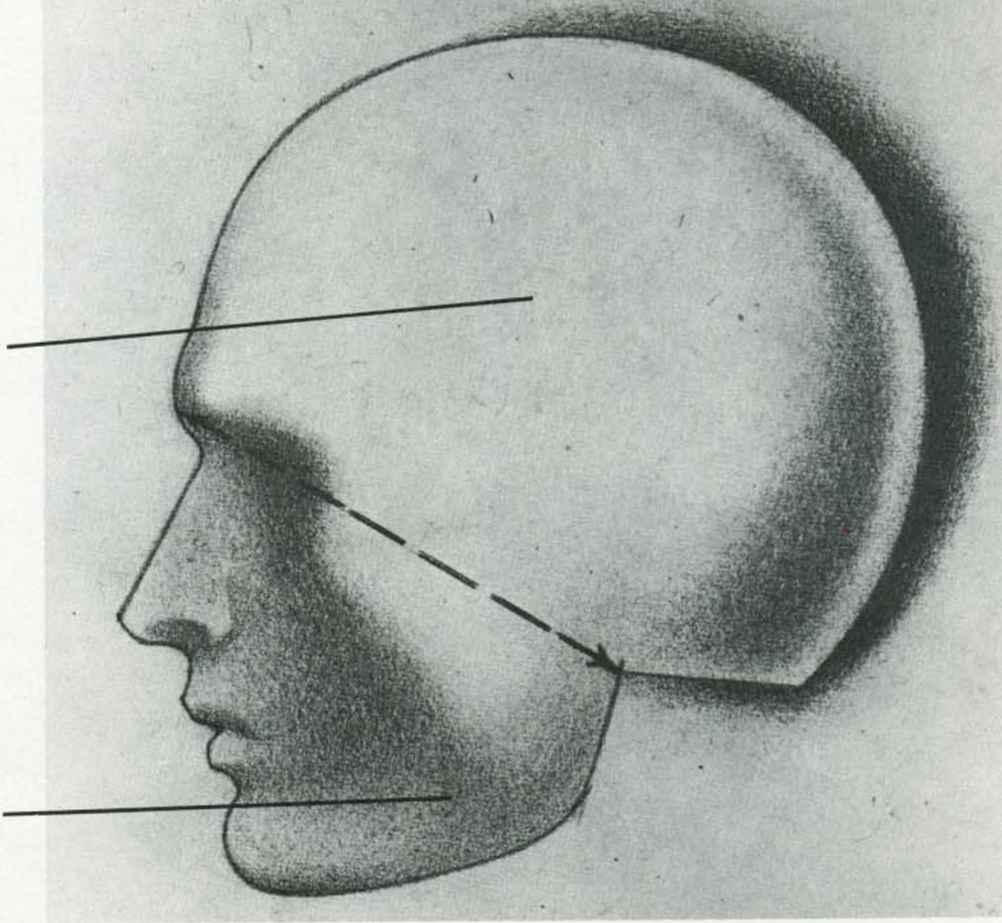 how to draw a human head side view
