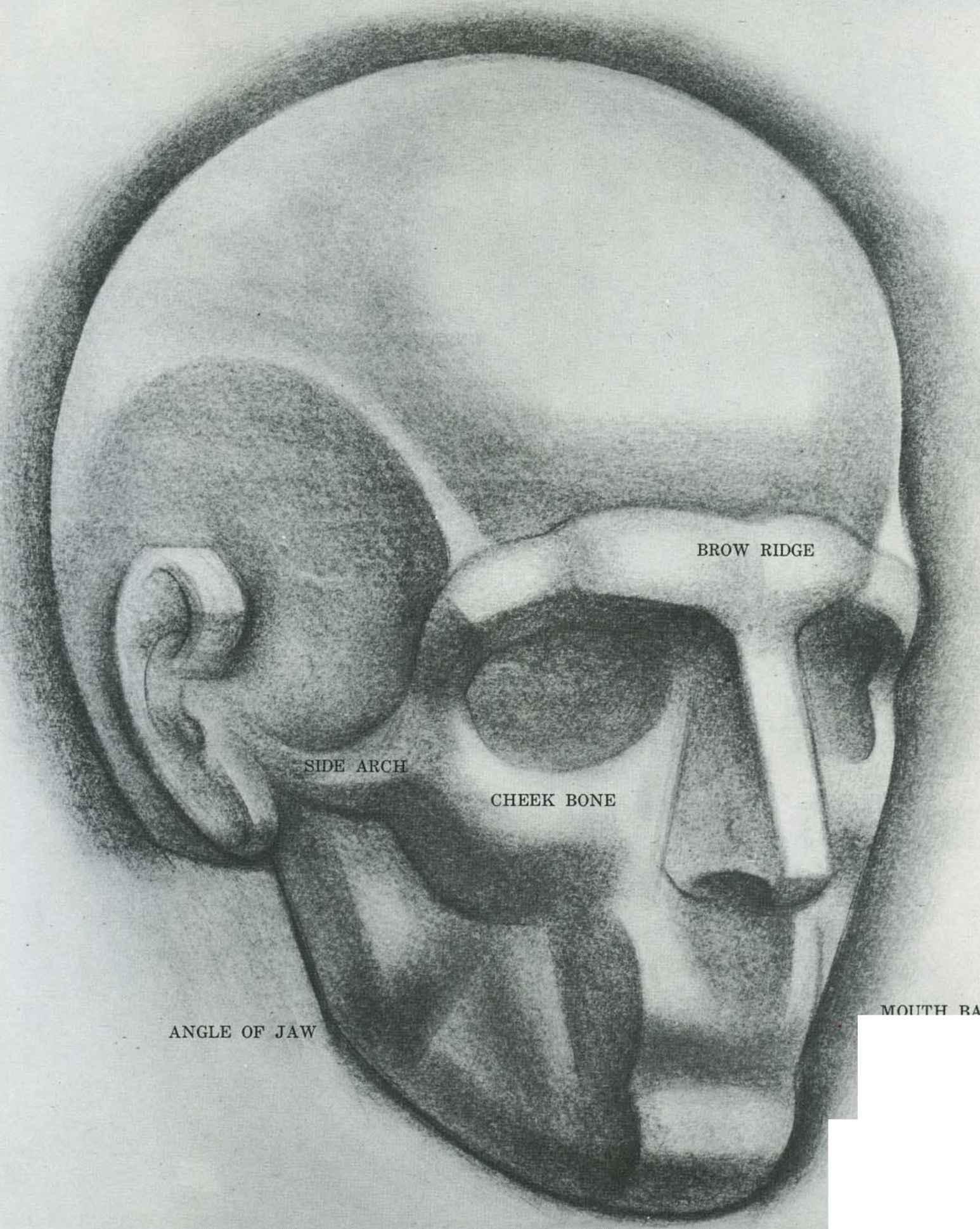 Forms of Skull - Drawing the Human Head - Joshua Nava Arts