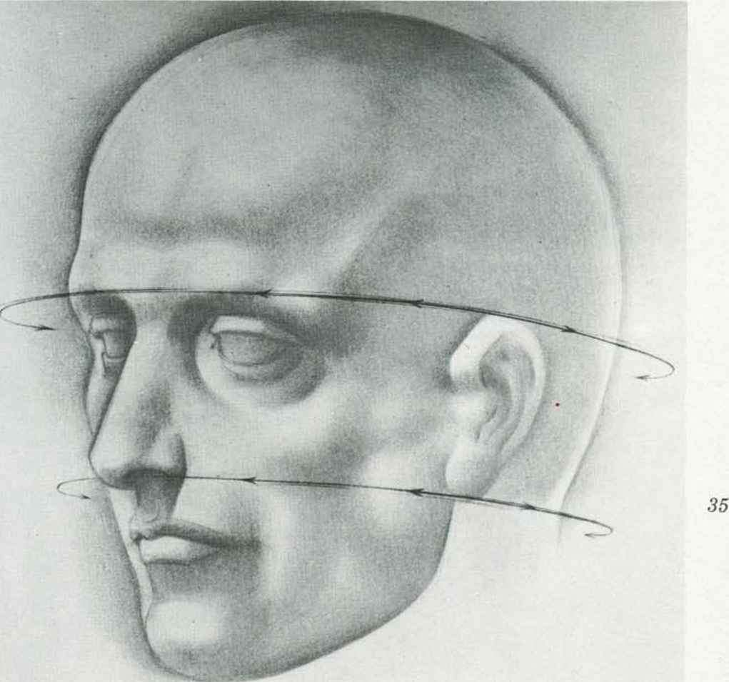 Line Drawing Of Human Face : Proportions and measurements drawing the human head