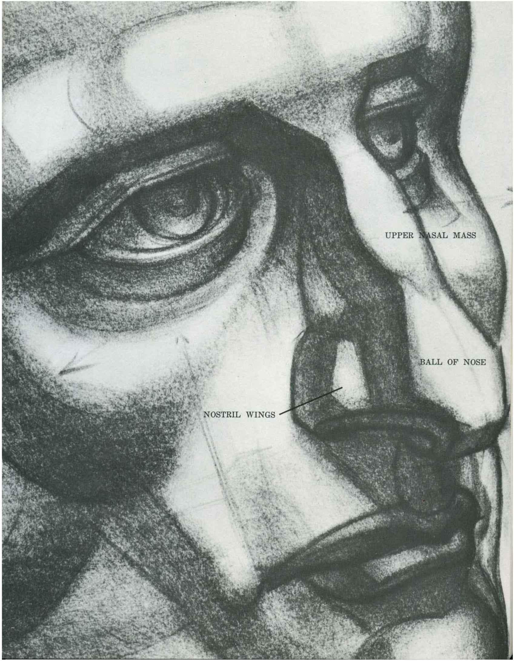 How Draw Human Figure Proportions Drawing Human Head Drawing The Human Head  Joshua Nava Arts