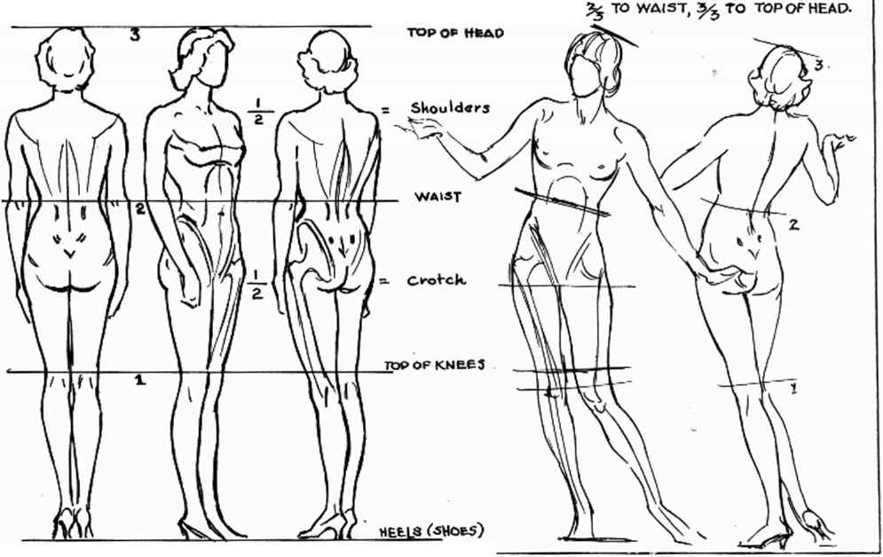 Female Model Body Proportions The Image