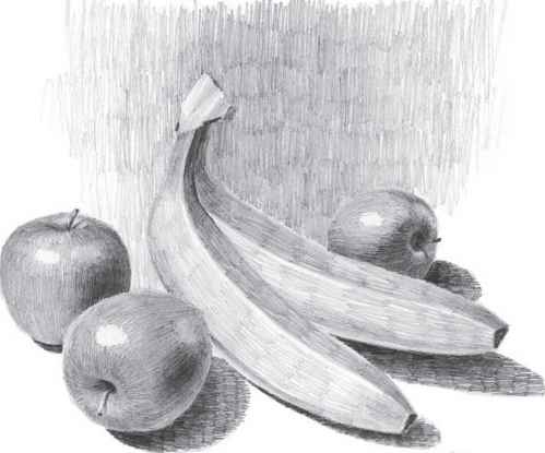Vegetable Pencil Drawing