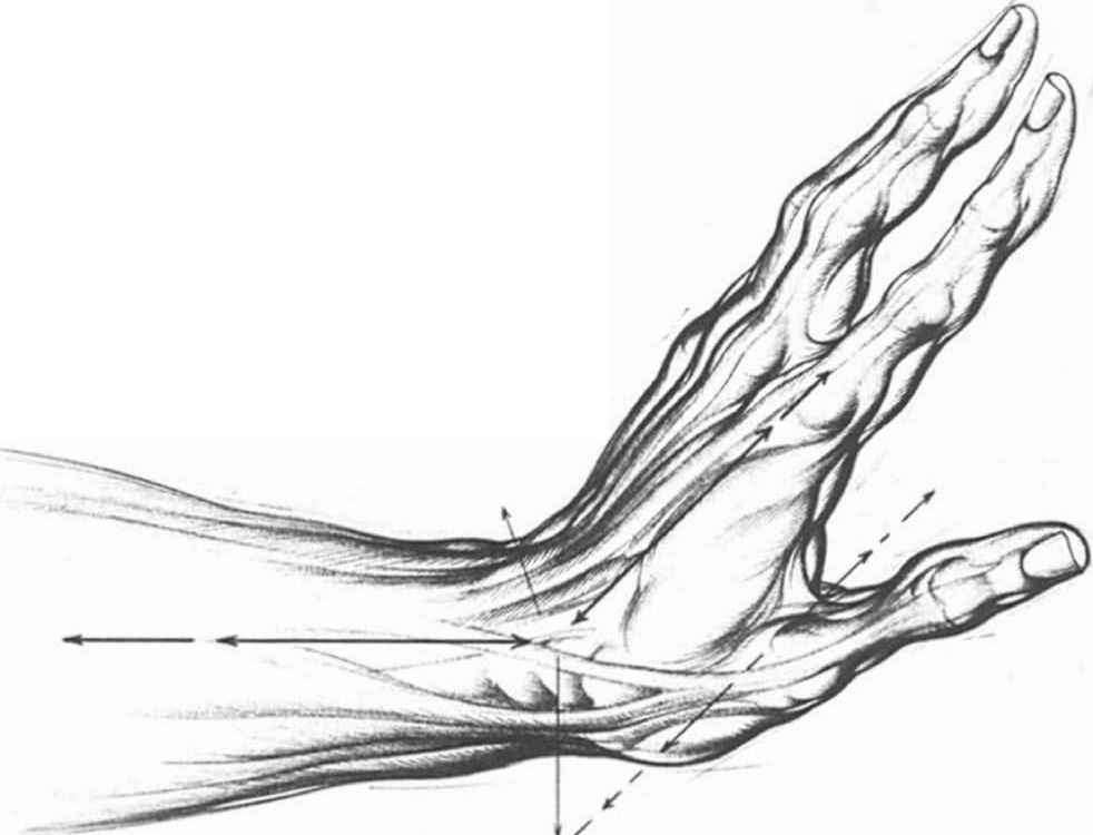 Palm Muscles Sketch