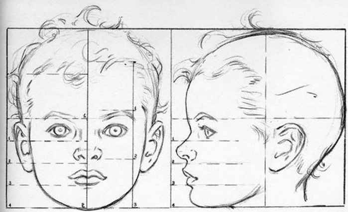 Child Face Proportions